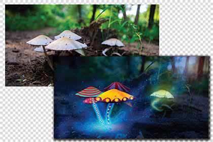 Photo Color Correction